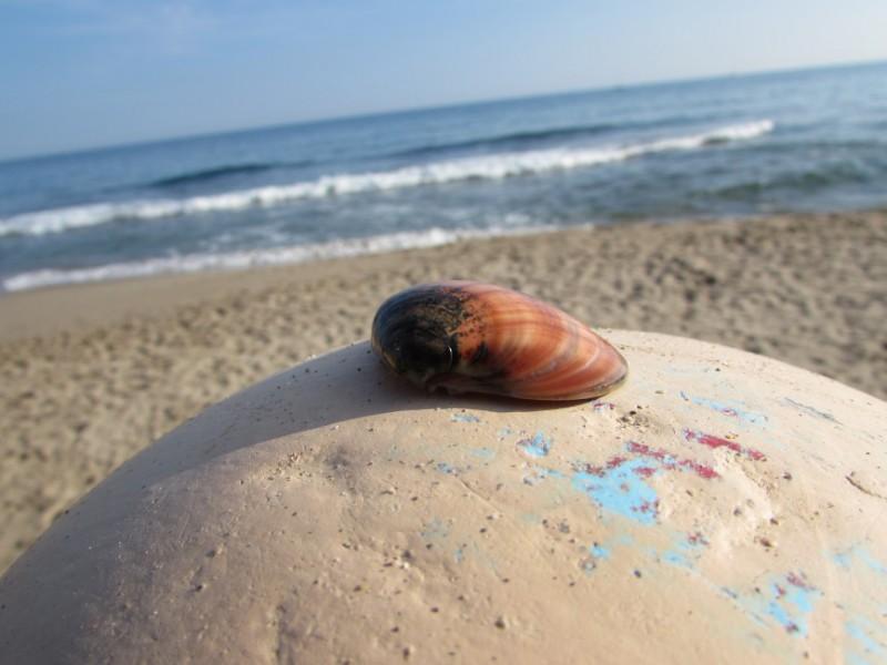 Shell Garraf