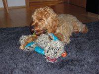 Barkleys Lieblingsspielzeug, die Patchwork Maus