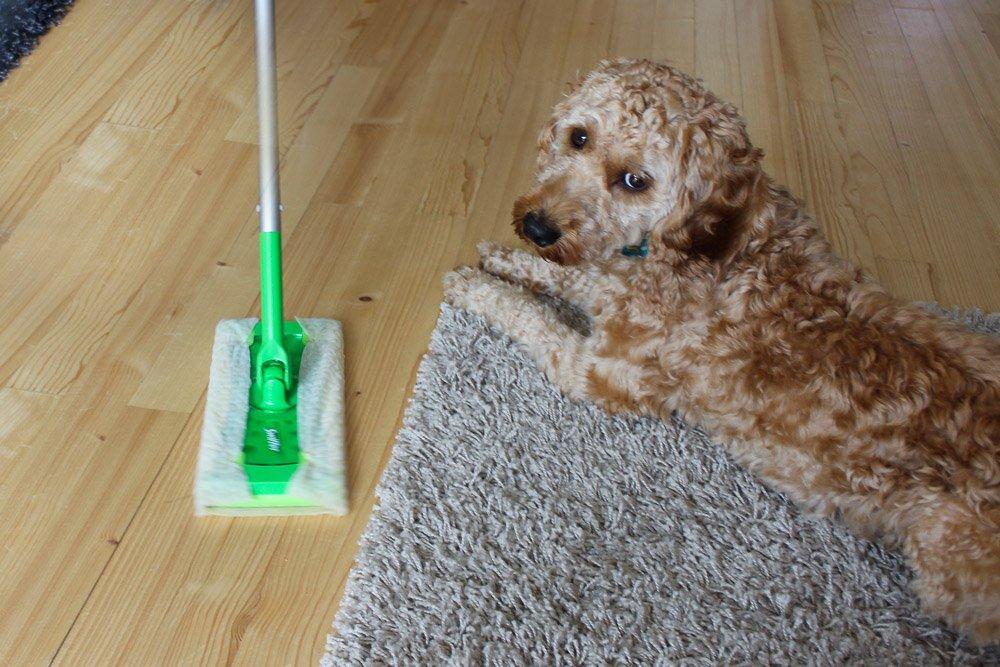 Swiffer Bodenwischer Hund